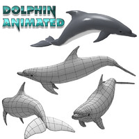 Dolphin Animated