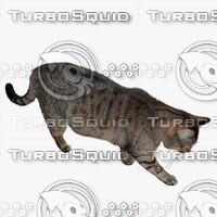 GW Cat A 03