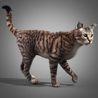 3d model of cat fur