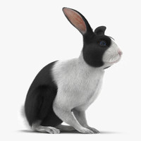 3d model black rabbit pose 3