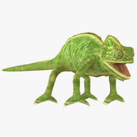 chameleon colors look 3d model
