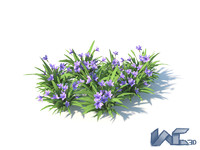 flower blue max