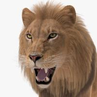 lion fur 3d ma