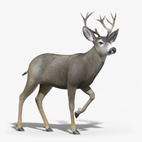 3d mule deer stag rigged model