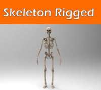 3d model rigged human skeleton body