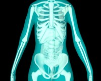 3d xray thorax abdomen internal organs