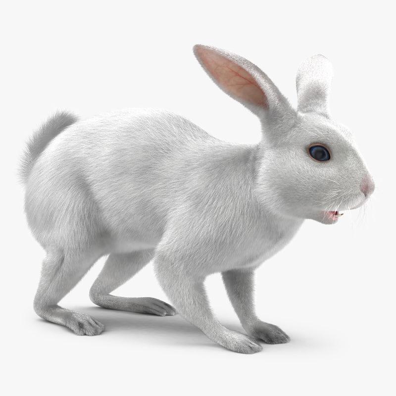White Rabbit 3d model 01.jpg