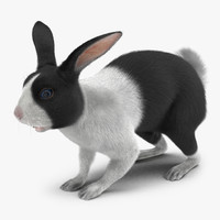 3d model black rabbit