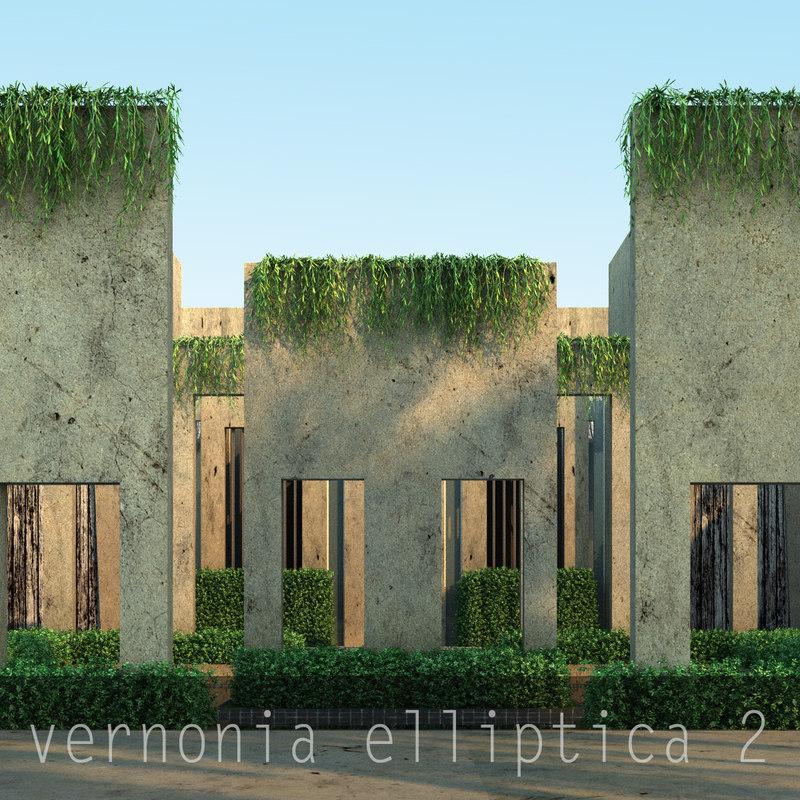 vernonia elliptica2_0.jpg