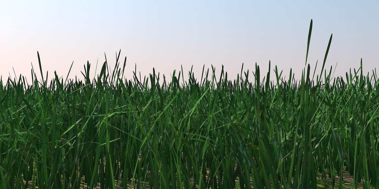 Grass Front.jpg