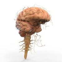 3d 3ds brain