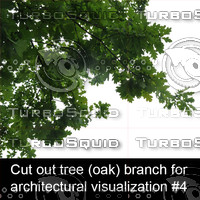 Cut out oak tree branch for architectural visualization #4