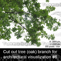 Cut out oak tree branch for architectural visualization #6