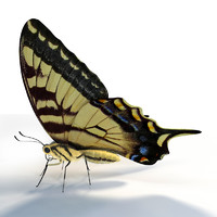 butterfly papilio machaon 3d model