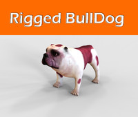 Bulldog Rigged
