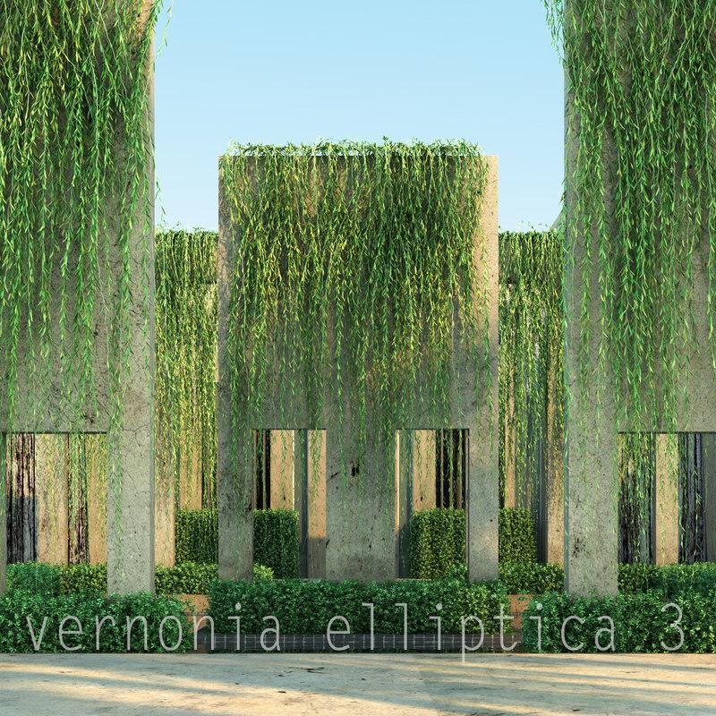 vernonia elliptica3_00.jpg
