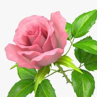 3d rose 5
