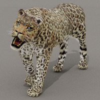 zbrush cat leopard fur 3d model