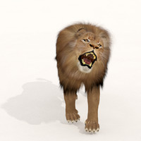 3d zbrush cat lion fur model