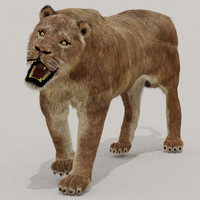 zbrush cat lioness fur max