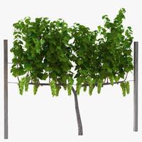 vineyard green grapes 3d model