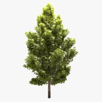 3d model tree