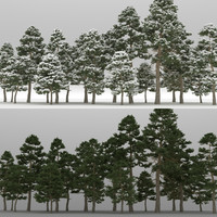 3d model 20 pinus cembra trees