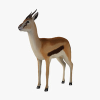 3d model fawn gazelle