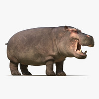 3d hippopotamus 2 fur model