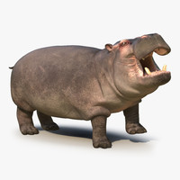 max hippopotamus rigged