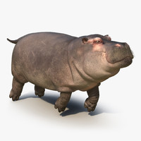 3d floating hippopotamus fur