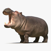 3d hippopotamus pose 2 fur model
