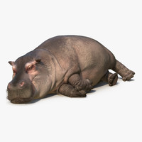 lying hippopotamus fur max
