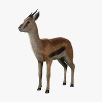 3d model thomson gazelle fawn -