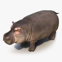 3d 3ds hippopotamus hippo