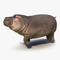 floating hippopotamus 3d model