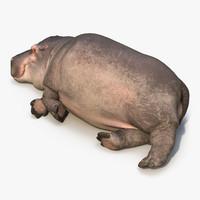 3d lying hippopotamus