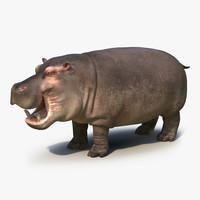 3ds hippopotamus 2