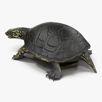 3d model european pond turtle pose