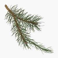 3d model of pine tree 03