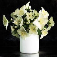 max jasmine flower vase