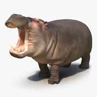 hippopotamus pose 2 max