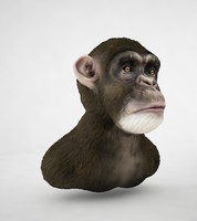 chimpanzee chimp max
