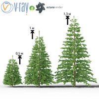 3d model young christmas trees