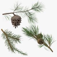 pine tree sprig 3d model