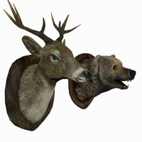Bear and deer head