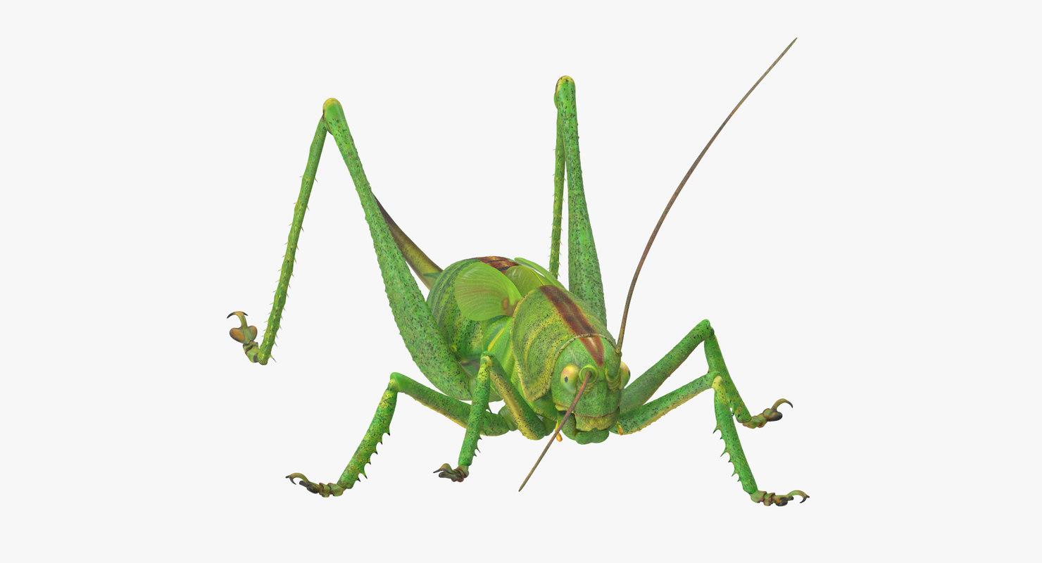 Grasshopper_01_001_Thumbnail_0000.jpg