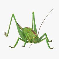 3d standing grasshopper model
