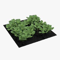 3d young cabbage plants garden model