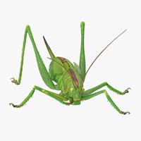eating grasshopper 3d model